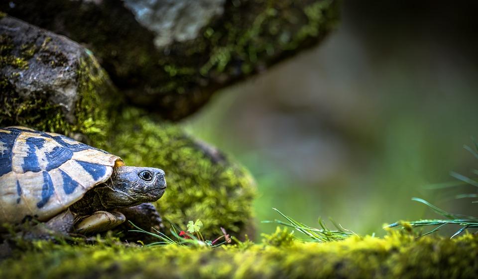 Limite de place pour les tortues